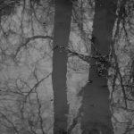 Forêt - Laurent Berger - Poète Photographe